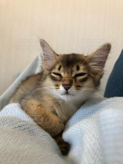 お昼寝中の子猫の写真・画像素材[2292252]
