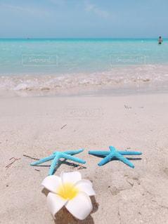 美しすぎるビーチの写真・画像素材[2329560]