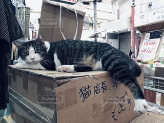 猫,屋内,沖縄,商店街,レトロ,店,ナチュラル,フィルム,雰囲気,フィルム写真,店長,フィルムフォト