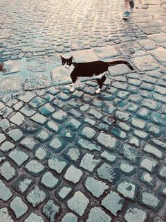 街中を散歩中の猫の写真・画像素材[2436130]