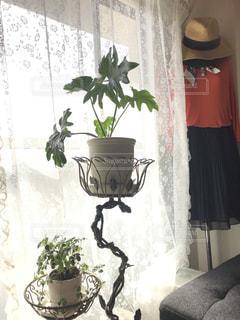 観葉植物の写真・画像素材[2736134]