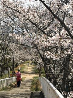 桜の写真・画像素材[3040485]