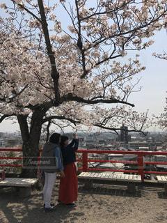 女性,2人,風景,空,春,桜,木,屋外,花見,樹木,お花見,人,イベント,地面,さくら,桜満開