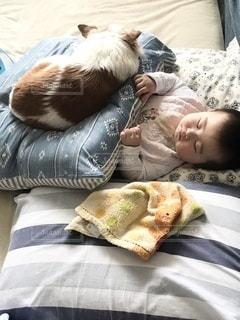 赤ちゃんと犬のお昼寝タイムの写真・画像素材[3391389]
