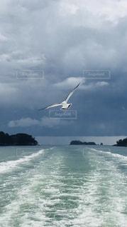 birdの写真・画像素材[1718797]