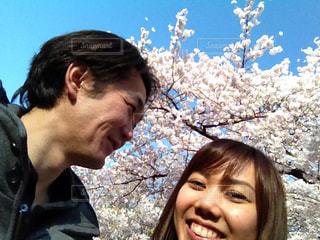 桜の写真・画像素材[1774050]