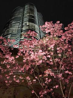 夜桜ヒルズの写真・画像素材[1792894]