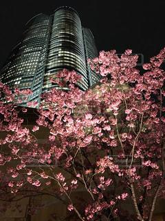 夜桜の写真・画像素材[1833324]