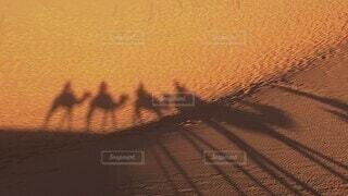 絶景,屋外,朝日,砂,茶色,影,観光,逆光,砂漠,ラクダ,平和,日の出,早朝,のんびり,女子旅,海外旅行,モロッコ,ゆったり,シャドウ,象徴,卒業旅行,フォトジェニック,サハラ砂漠,サハラ,エモい,インスタ映え,平等,ラクダ乗り,ヒトコブラクダ,短い動画