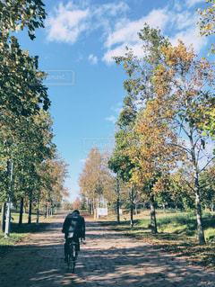男性,10代,公園,秋,紅葉,自転車,木,雲,青空,影,男,落ち葉,並木道,通り抜け