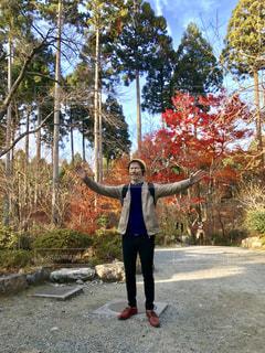 自然,風景,秋,紅葉,木,山