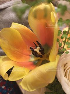 お花🌼の写真・画像素材[1826748]