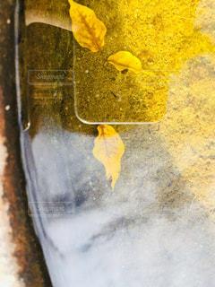 水,黄色,メダカ,水槽