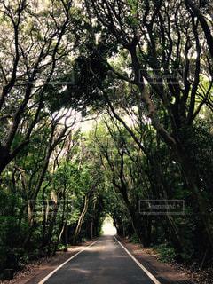 道,海岸沿い,森の道