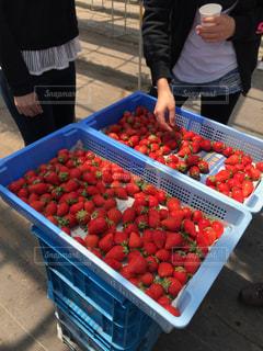 フルーツ,果物,果実,イチゴ