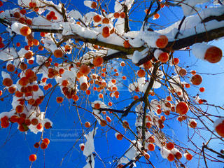 近くの木のアップの写真・画像素材[1732946]
