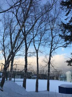 雪に覆われた木の写真・画像素材[1736729]