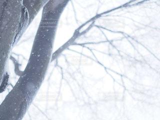 近くの木のアップの写真・画像素材[1732967]