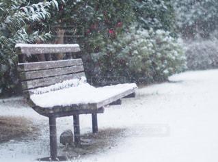 雪に覆われた公園のベンチの写真・画像素材[1732987]