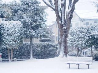 雪に覆われた公園のベンチの写真・画像素材[1733099]
