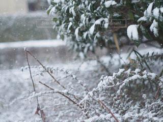 近くの雪を被りの森の写真・画像素材[1733174]
