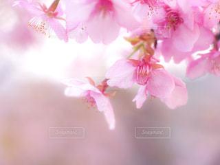 植物にピンクの花の写真・画像素材[1884674]