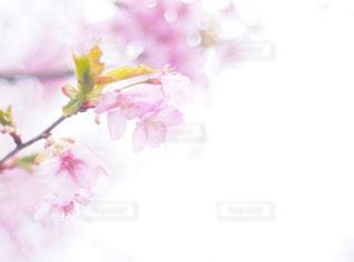 近くの花のアップの写真・画像素材[1884773]