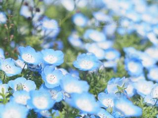 近くの花のアップの写真・画像素材[1884795]