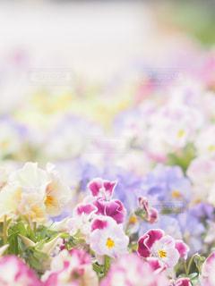近くの花のアップの写真・画像素材[1884899]