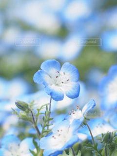 近くの花のアップの写真・画像素材[1884906]