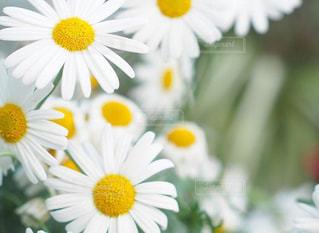 近くの花のアップの写真・画像素材[1884971]