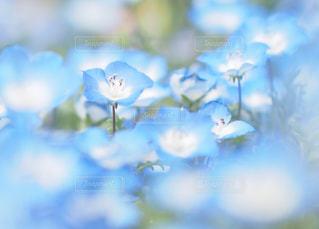 花の写真・画像素材[2044521]