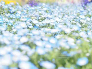 花の写真・画像素材[2044523]
