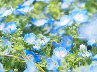花の写真・画像素材[2044526]