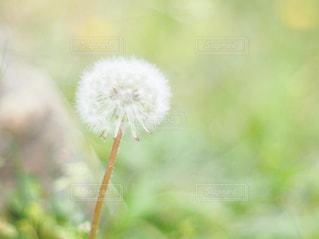 春の写真・画像素材[2044561]