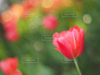 春の写真・画像素材[2044567]