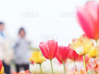 春の写真・画像素材[2044572]