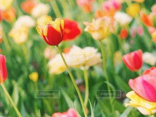 花の写真・画像素材[2044580]