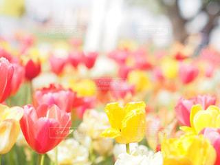 春の写真・画像素材[2044607]