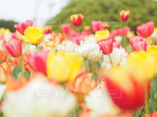春の写真・画像素材[2044618]