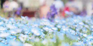 春の写真・画像素材[2044619]