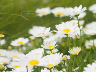 花の写真・画像素材[2044625]
