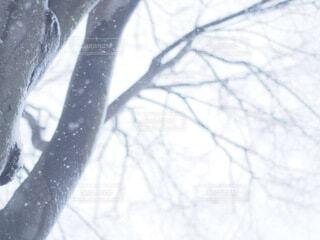 雪に覆われた木 冬景色の写真・画像素材[4191994]