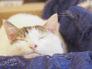 おねだり猫の写真・画像素材[4247600]