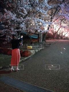 春,桜,屋外,夜桜,シャボン玉,お花見,ライトアップ