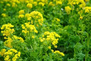 花,春,屋外,緑,黄色,デート,日中