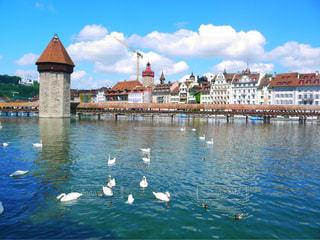 湖,海外,旅,スイス,白鳥,海外旅行