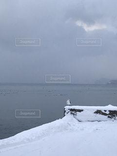 雪の港に佇むかもめの写真・画像素材[1732201]