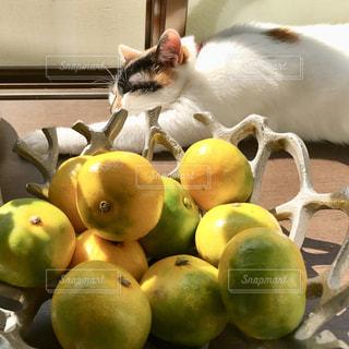 みかんと猫の写真・画像素材[1765019]
