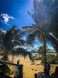 海外,ビーチ,晴天,旅行,リゾート,常夏,海外旅行,カンクン,メキシコ